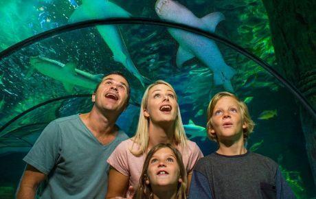 Kelly Tarlton's Aquarium
